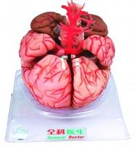 Model mózgu z tętnicami