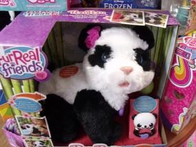 chodząca panda